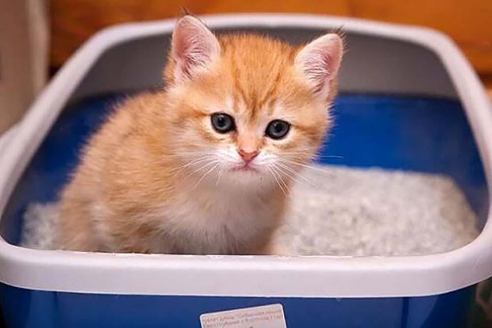 Фотография Котята коты Сбоку морды вблизи животное | 667x1000
