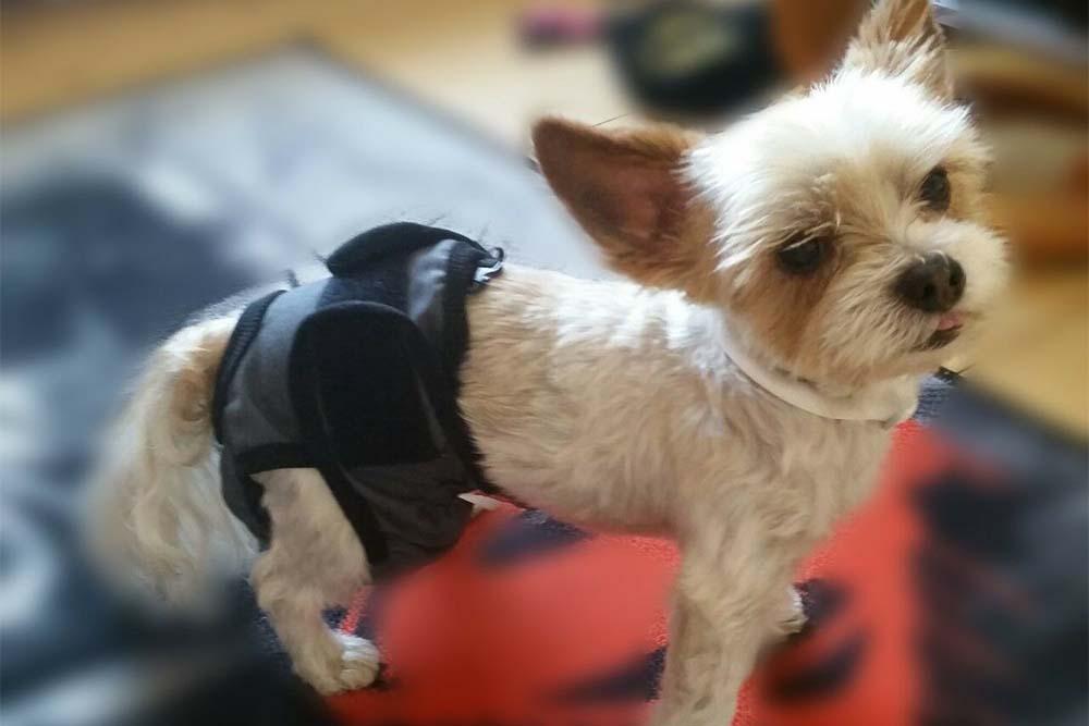 Как сделать памперс для собаки и как правильно его одеть   Зоомагазин Сытая Морда
